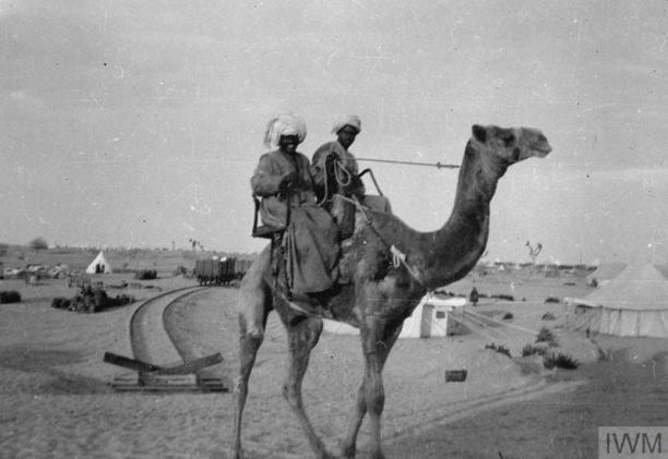 egyptian camel corps ambulance camel