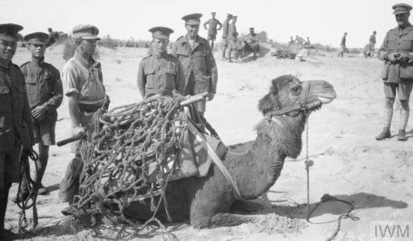 herbert camel photo