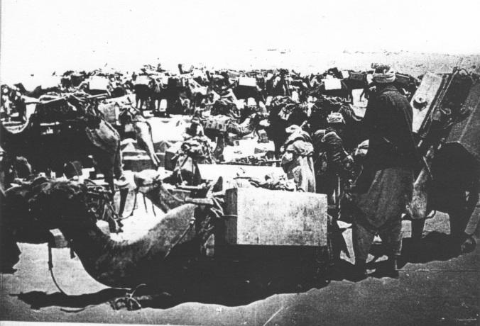 IWMQ15857 Camel Transport carrying 12 gallon water tanks