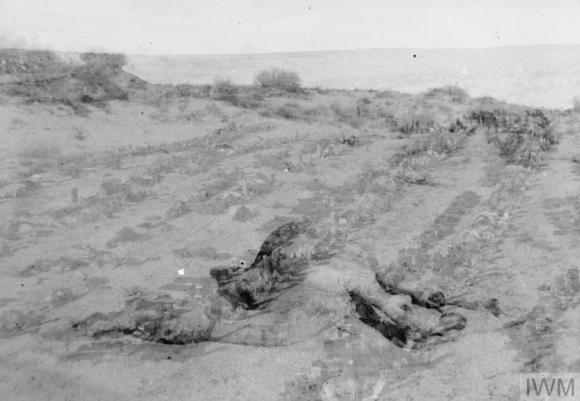 Q57708 Dead camel in desert
