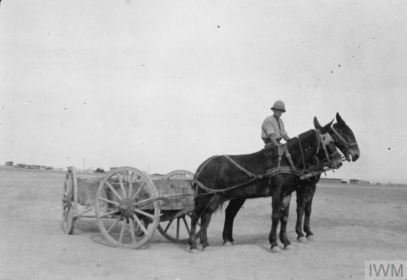 1.11 mule and limbeer at Kantara
